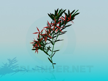 3d model Indoor flower - preview