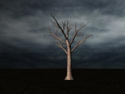 árbol sin hojas