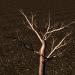 3D modeli Ağaç - önizleme