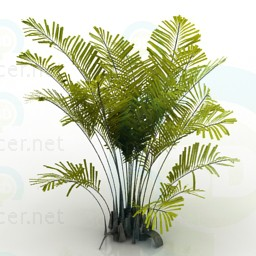 3d model palm, , - Free Download | 3dlancer net