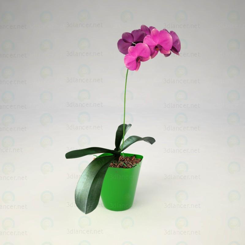 Orquídea Phalaenopsis 3D modelo Compro - render