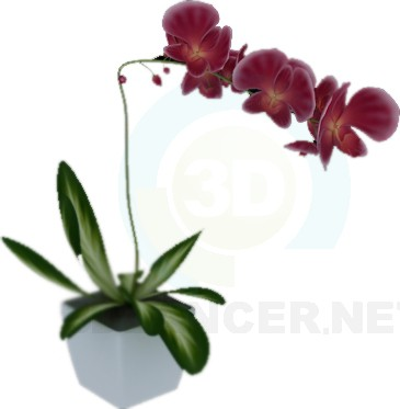 3d model orchid - preview