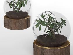 Бонсай-рослина-01