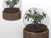 Bonsai Plant-01
