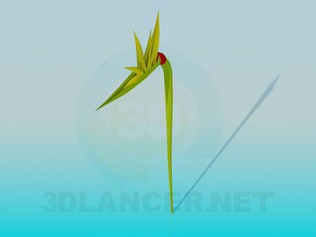 3d model Flower bud - preview