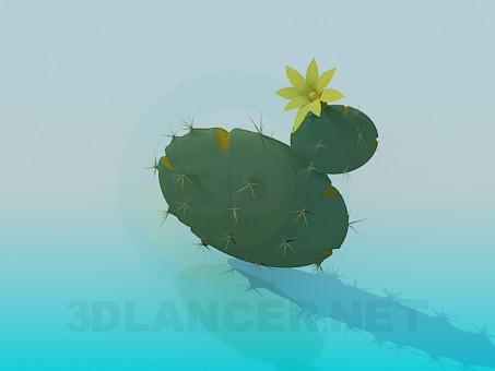 modelo 3D Flor de un cactus - escuchar