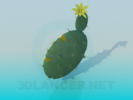 3d model Flower of a cactus - preview