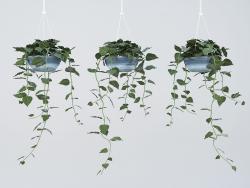 macetero con plantas